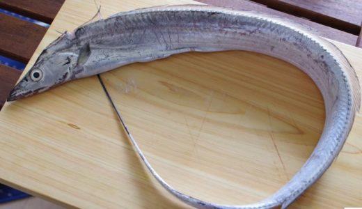 鮨好きがオススメ。魚をさばくのが楽しくなる必携アイテム&便利な道具!