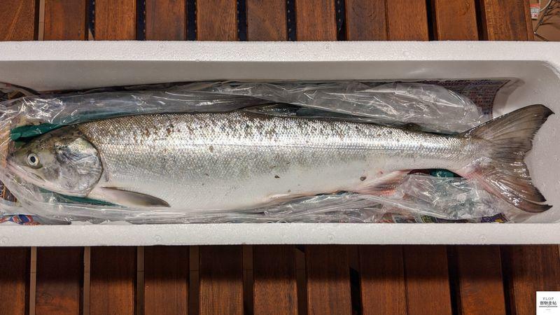f:id:edomae-sushi:20200917102730j:plain