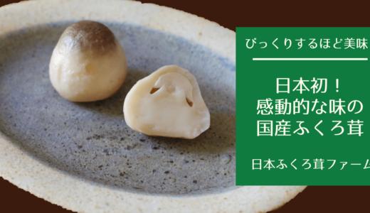 【感動保証】珍しい上に美味!日本でここだけ、国産ふくろ茸!【日本ふくろ茸ファーム】