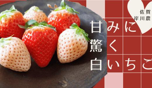 【甘くて美味しい白イチゴ】佐賀・岸川農園の【淡雪】と【さがほのか】